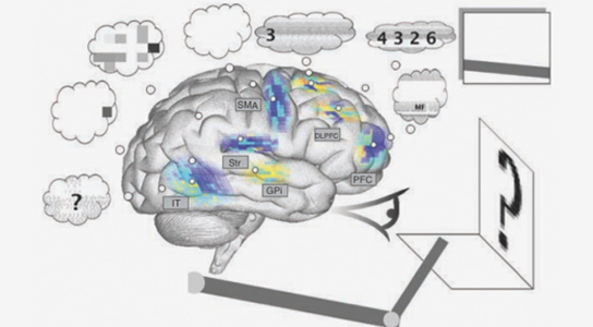 Simulated Brain Performs Well at Simple Tasks