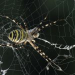 spider-in-web