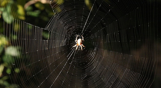 spider-silk-strength-web
