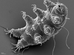 tardigrade-paws-up