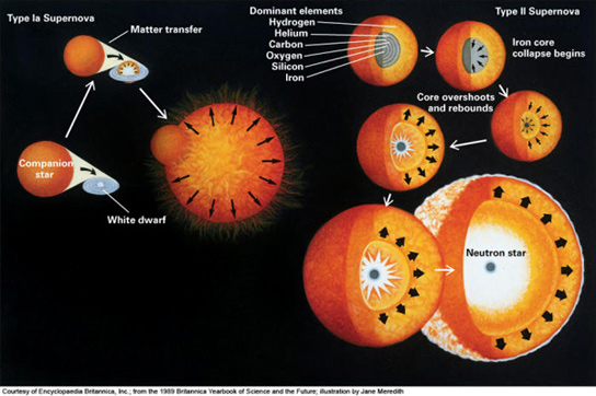 supernova nucleosynthesis massive stars Start studying astr 207 - ch 21: stellar explosions learn vocabulary, terms, and more with carbon begins fusing everywhere throughout the dwarf and the star explodes into a type i supernova (not all low-mass stars die this why do the cores of massive stars evolve into iron and not.