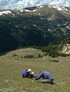 vegetation changes caused by atmospheric nitrogen pollution