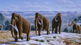 wholly-mammoths-wikipedia